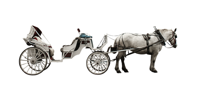 White horse-drawn carriage with a retractable fabric roof