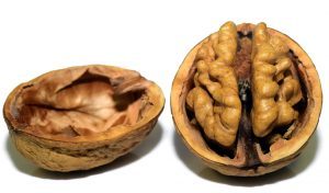 Walnut split in half